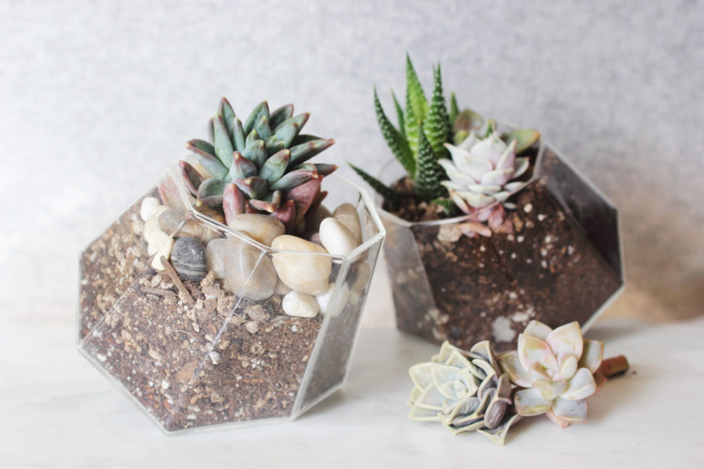Bring Immediate Life Into Your Home With Low Maintenance Terrariums